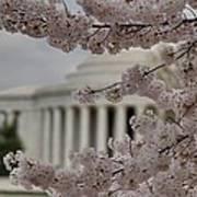 Cherry Blossoms With Jefferson Memorial - Washington Dc - 01133 Art Print