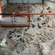 Cleveland-lloyd Dinosaur Quarry Fossils Art Print