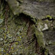 Closeup Of Bark Covered In Lichen Art Print