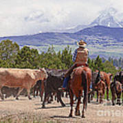 Colorado Cowboy Cattle Drive Art Print