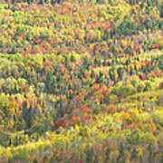 Colorful Autumn Forest In Mount Blue State Park Weld Maine Art Print