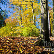 Colorful Fall Autumn Park Art Print