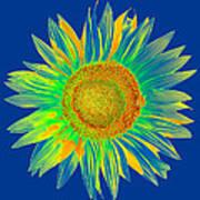 Colourful Sunflower Art Print