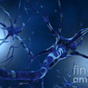 Conceptual Image Of Neuron Art Print