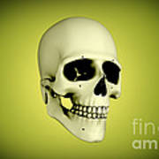 Conceptual View Of Human Skull Print by Stocktrek Images