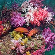 Coral Reef Scenery Art Print