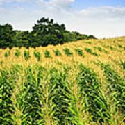 Corn Field Print by Elena Elisseeva