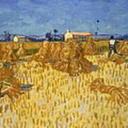 Corn Harvest In Provence Art Print