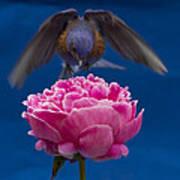 Count Bluebird Art Print by Jean Noren