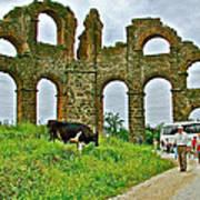 Cow By Second Century Aspendos Aqueduct-turkey Art Print