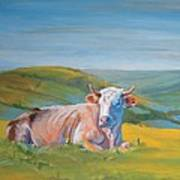 Cow Lying Down Art Print