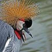 Crowned Crane Art Print by Skip Willits