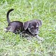Cute Puppy In The Grass Art Print by Jannis Werner