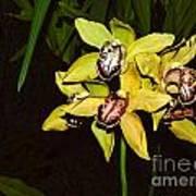 Dendrobium Orchid Art Print