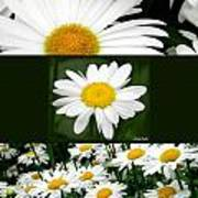 Daisy Collage Art Print