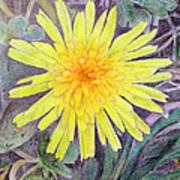 Dandelion Art Print by Linda Pope
