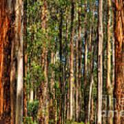 Dandenong Forest Art Print