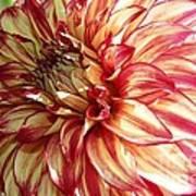 Dazzling Dahlia  Art Print