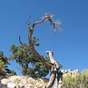 Dead Tree At Grand Canyon Art Print
