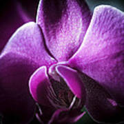 Deep Purple Orchid Art Print