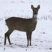 Deer In The Snow Netherlands Art Print