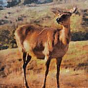 Deer On Mountain  Art Print