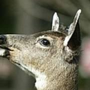 Deer Sunshine Profile Art Print