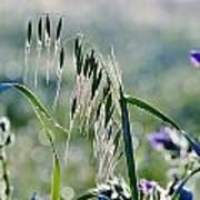 Dew Drops On Grass Art Print