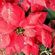 Diamond Encrusted Poinsettias Art Print