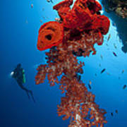 Diver Looks On At A Bright Red Soft Print by Steve Jones