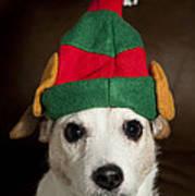 Dog Wearing Elf Ears, Christmas Portrait Art Print