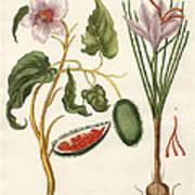 Dye Plants Art Print