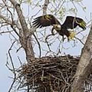 Eagle Nest Art Print