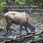 Elk Drinking Water From A Stream Art Print