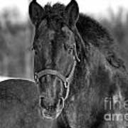 Equine Majesty Art Print