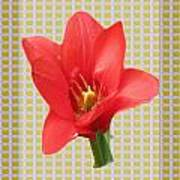 Exotic Red Tulip In Bold And Two Border Patterns Tiny Sparkle Parallal Horizontal Strips Summer Flow Art Print