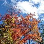 Fall Colors And Blue Sky Art Print