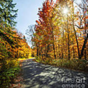 Fall Forest Road Art Print