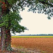Farmland View Art Print