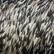 Feather Texture Art Print