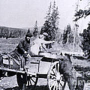 Feeding Bear Yellowstone National Park Art Print
