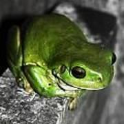 Fence Frog Art Print