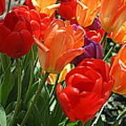 Festival Of Tulips Art Print