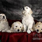 Festive Puppies Art Print