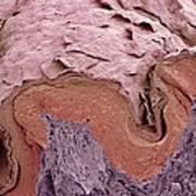 Finger Skin, Sem Art Print