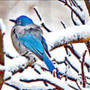 First December Snow Art Print