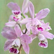 Five Beautiful Pink Orchids Art Print