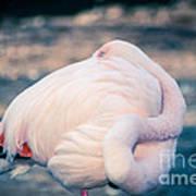 Flamingo 2b Art Print