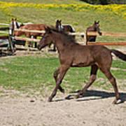 Foal Art Print