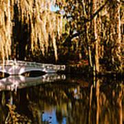 Footbridge Over Swamp, Magnolia Art Print